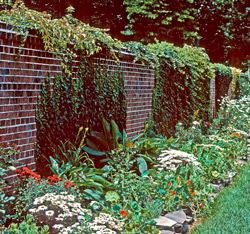 South facing brick wall creates warmer conditions.