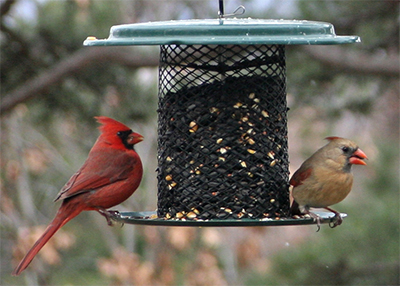 A pair of cardinals