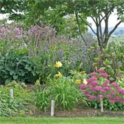 Fall garden with Sedum