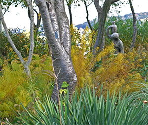Amsonia hubrichtii turns a rich golden yellow in the fall.