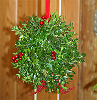 Boxwood balls are a festive holiday favorite!