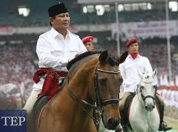 bowo horse