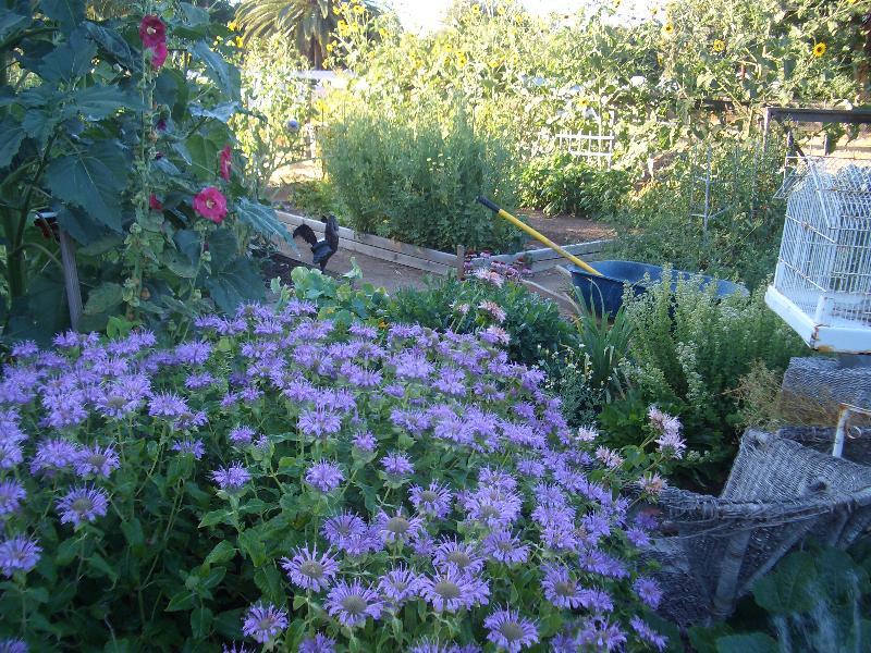 Growcology Vegetable Garden
