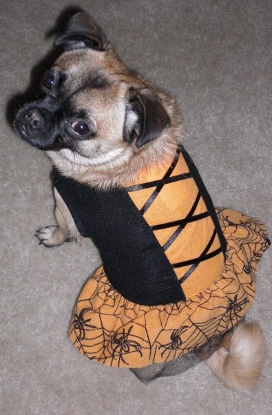 Hallie_pet safety tips for halloween