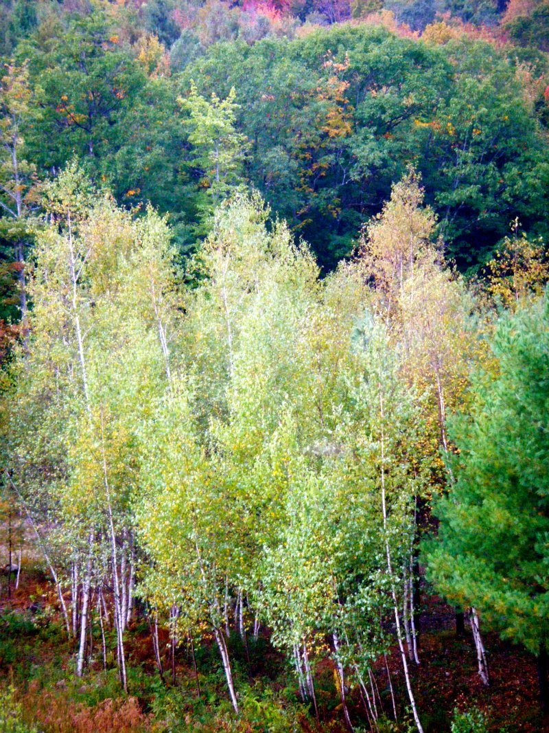 NH trees2