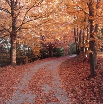 autumn-foliage-road.jpg