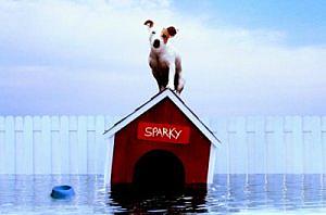 sparky flood