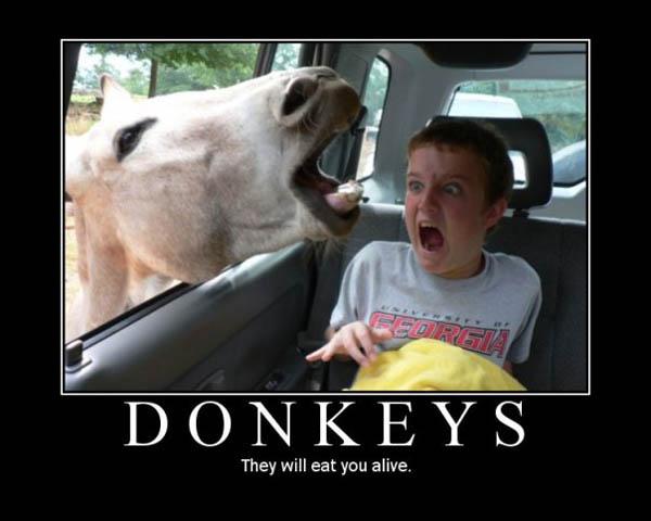 Donkey Inspirational Poster