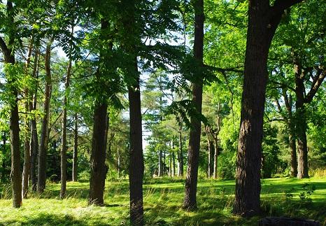 Ignatius Centre Trees