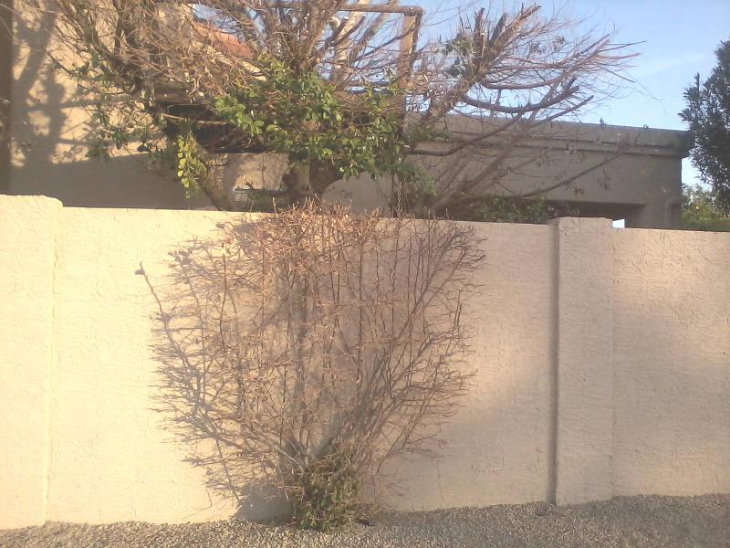need pruning