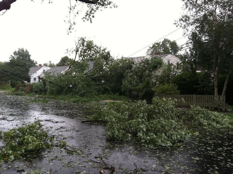Hurricane Irene Seaside Trees