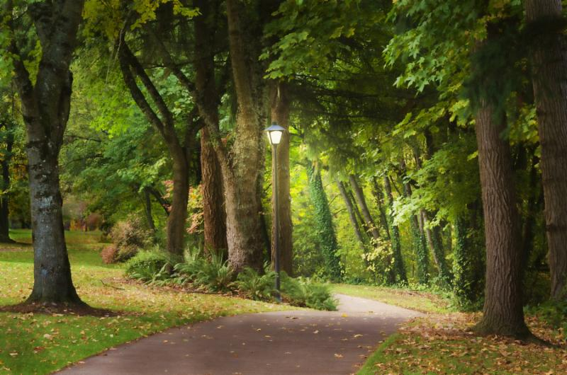A glowing lampost at the beginning of a fantasy woodland path beckons the viewer to enter on an...