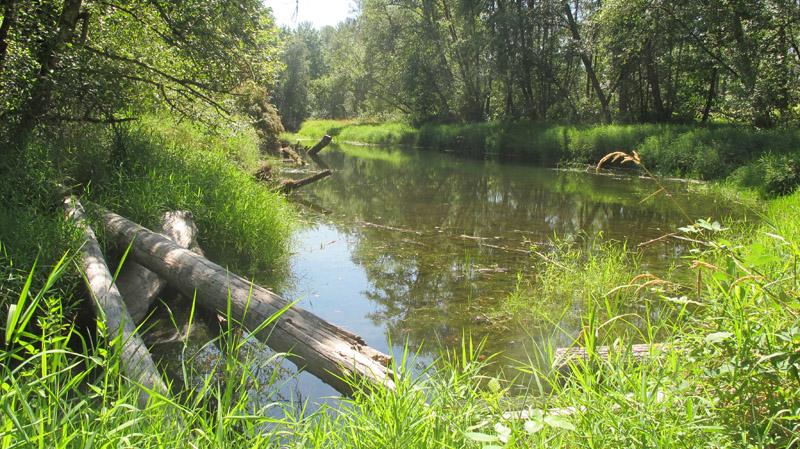 Beaver dam on BWCA