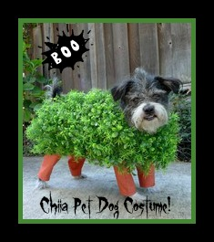 Halloween Chia Dog
