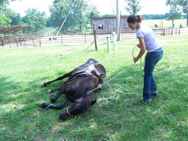 Nicole laying horse down