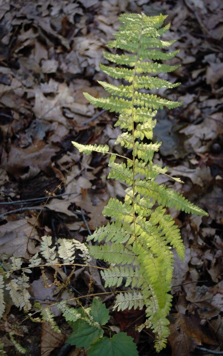 Sunlight on a fern