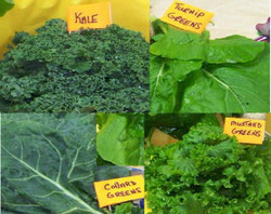 Variety of delicious greens