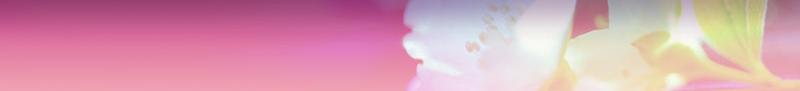 soft-flower-banner.jpg