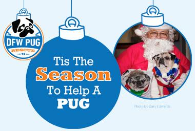 Tis the season to help a pug