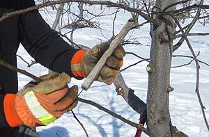Tree_limb_spreader