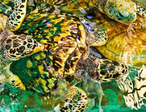 Sea Turtles by Bruce Bozman