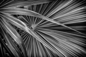 Palm 5 by Gil Maker