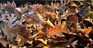 Autumn Symphony by Dan Nolan