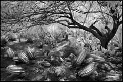 Cactus Garden by Jim Dusen