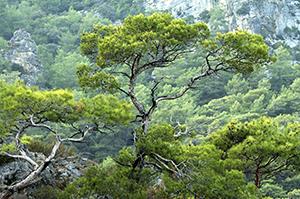 Aegean Trees by Joel Krenis