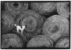 Dog and Hay by Stacey Hoff