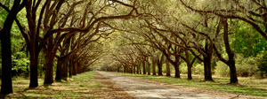 Oaks of Wormsloe by Phyllis Thompson