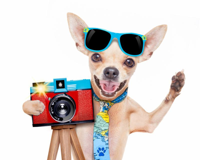 cool tourist photographer dog taking a snapshot or picture with a retro old camera gesturing to say cheese isolated on white background