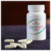 Laminine2
