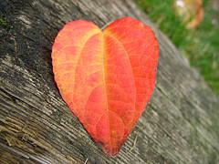 valentine leaf