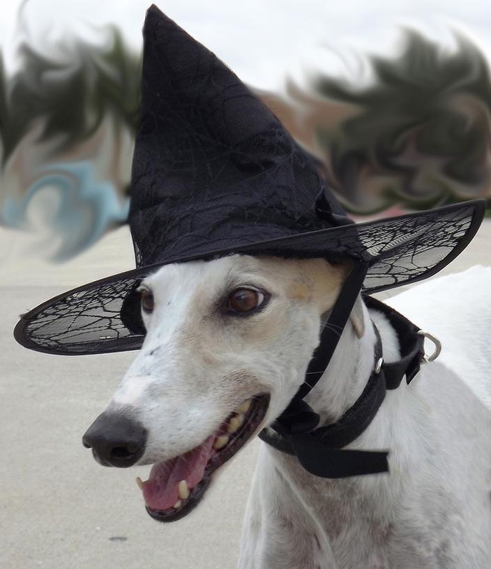 Milady Halloween