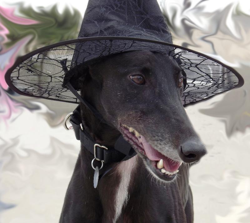 Pippi Halloween