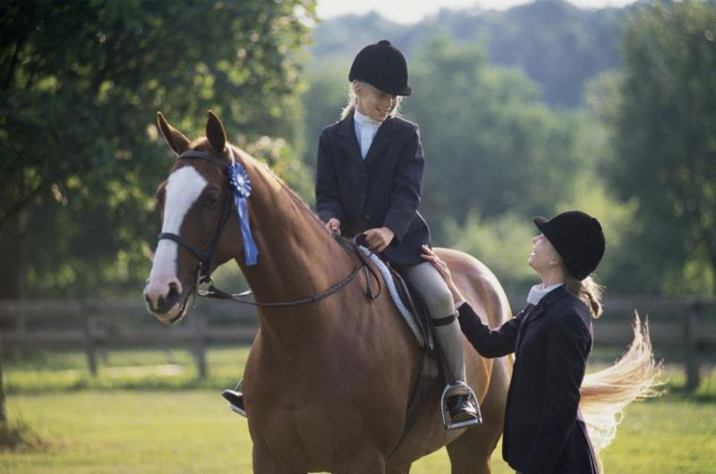 boarding a horse pasture vs stable essay
