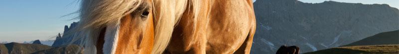 EEC horse