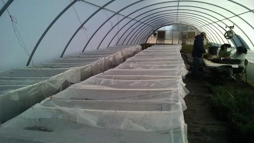 Grafting Tent