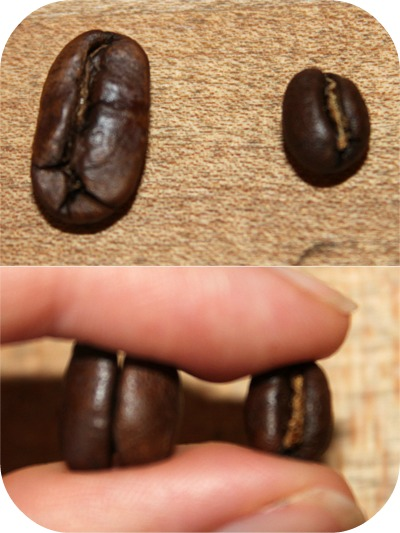 Peaberry Comparison