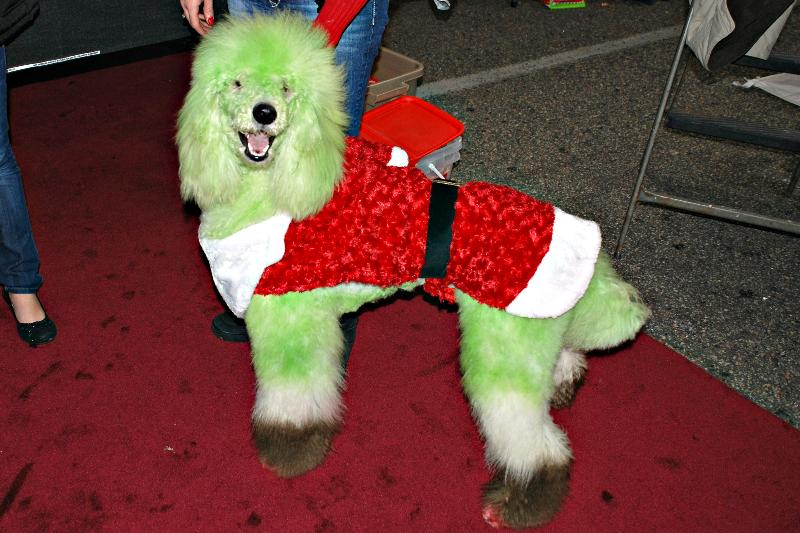 Bring the family dog to Downtown Conway on December 19 for the Conway Canine Christmas Costume Contest. Enjoy a holiday costume contest as well as contests ... & Conway Canine Christmas Costume Contest