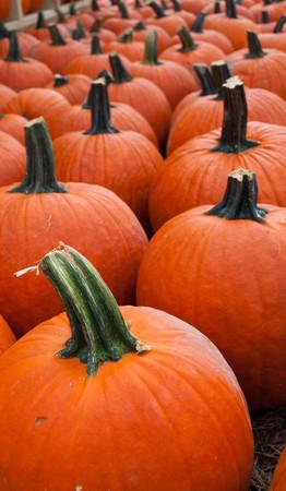 All Pumpkins HALF OFF this weekend at Odyssey FUN Farm http://conta.cc/1wnzCCk