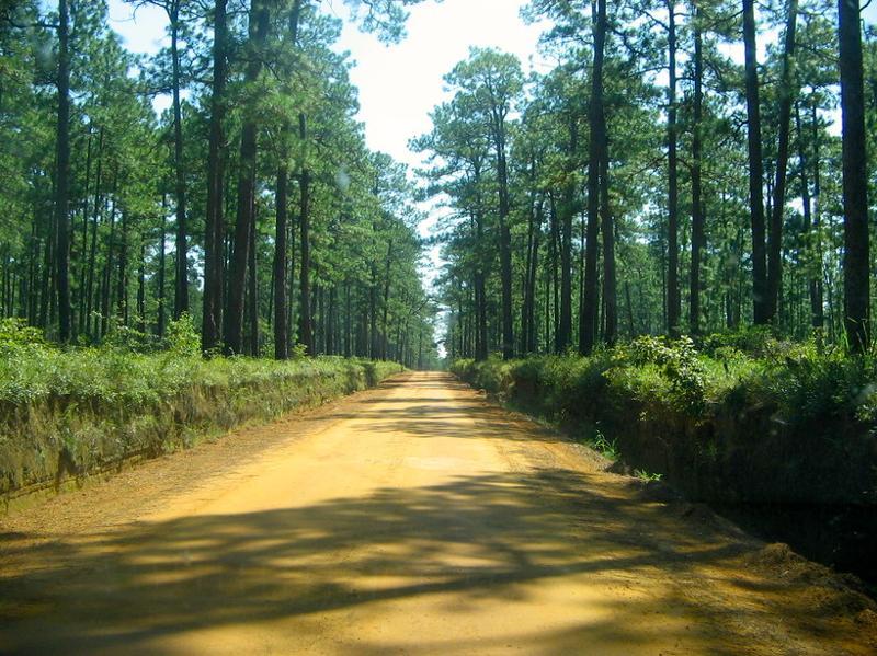 Ga road