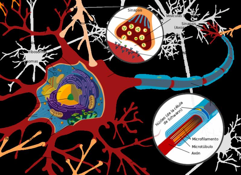 Curso de Anatomía en Línea | Trivectorworks