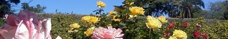 Rose Garden (Banner)
