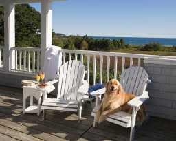 IBS Dog on Chair