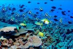 AQ Finding Nemo