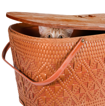 Image result for cat hiding