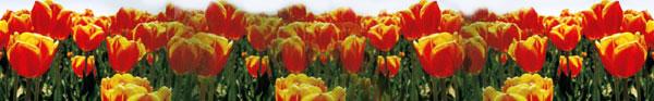 bright-field-flowers.jpg