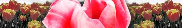 seasonal_flowers.jpg